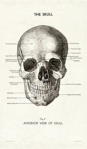 Cavallini Papers & Co. Cavallini Vintage Skull Cotton Tea Towel ()