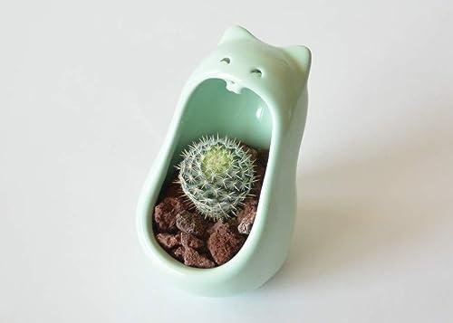 Macetas para cactushttps://amzn.to/2POAwFZ