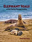 Elephant Seals at the Piedras Blancas Rookery, Elisabeth Haug, 1490374027