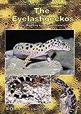 The Eyelash Geckos, Care, Breeding and Natural History