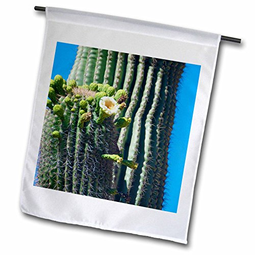3dRose USA, Arizona. Saguaro Cactus Blooms. - Garden Flag...