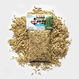 Product review for Priscillas Kitty Cat Pet Grass Seed Refill Pack (Barley, Oats, Wheat and Rye) 6 oz
