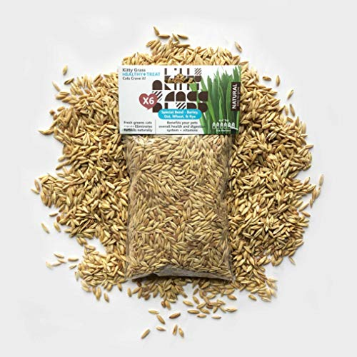 Priscillas Kitty Cat Pet Grass Seed Refill Pack (Barley, Oats, Wheat and Rye) 6 oz