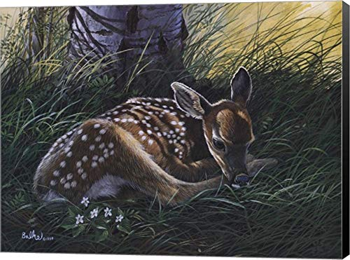 - Fawn by Don Balke Canvas Art Wall Picture, Museum Wrapped with Black Sides, 16 x 12 inches