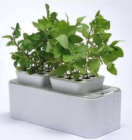 ZeroSoil Mini Indoor Garden   Self Watering Planter And Indoor Herb Garden