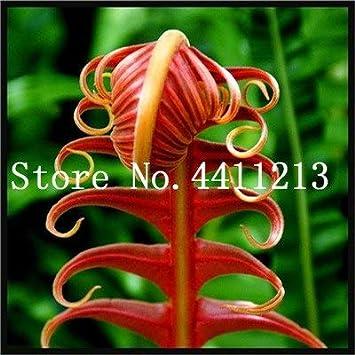 Bloom Green Co. Bonsai 100 Unids Raras Bonsai Colores Mezclados Helecho Plantas de Hierbas Perennes Bonsai Maceta Planta de Interior Para Huerto Fácil Crecer: 23