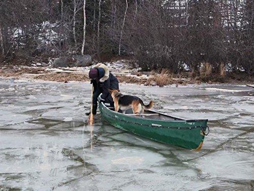 ice lake rebels - 1