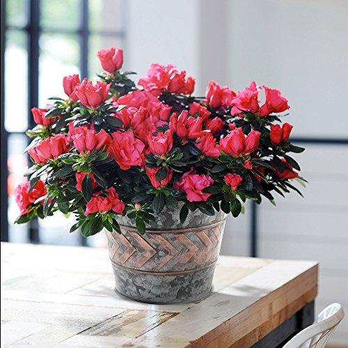 2 Pack Flower Pots Metal Galvanized Garden Decor Planters, 9 Inch, Indoor and Outdoor, (Metal Roses Pots)