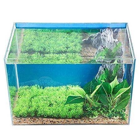 JIALONGZI 1 PCS Planta Viva Moss Ball Acuario pecera Ornamento bajo Mantenimiento, bordillos Crecimiento de Algas: Amazon.es: Productos para mascotas