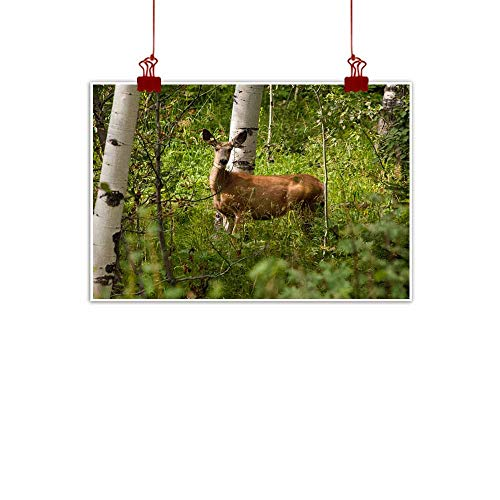 duommhome Wall Art Decor Poster Painting Mule Deer in Aspen Forest Near Centennial Wyoming Modern Minimalist Atmosphere 24