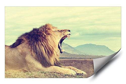 Roar Picture Lion (African Lion Roar with Mountains in Background Picture HD Vinyl Wall Art Poster Decal Sticker)