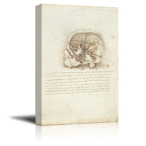 Anatomical Studies View of a Skull by Leonardo Da Vinci Print Famous Oil Painting Reproduction