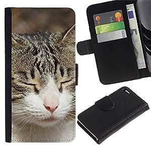 American Shorthair British House Cat - la tarjeta de Crédito Slots PU Funda de cuero Monedero caso cubierta de piel Apple Apple iPhone 4 / iPhone 4S