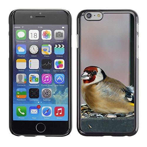 "Premio Sottile Slim Cassa Custodia Case Cover Shell // F00015111 oiseau // Apple iPhone 6 6S 6G PLUS 5.5"""