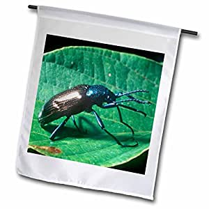 Danita Delimont - Insects - Beetle insect, Argentina - SA01 RGO0050 - Russell Gordon - 18 x 27 inch Garden Flag (fl_85469_2)