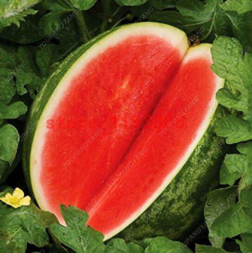 30 Pcs g/éant past/èque Black Seeds Tyran Roi Super Sweet Melon deau le jardinage savoureux fruits Bonsai graines Livraison gratuite