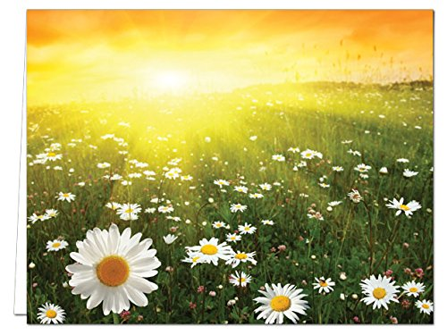 Sunny Side Up - 36 Note Cards - Blank Cards - White Envelopes ()