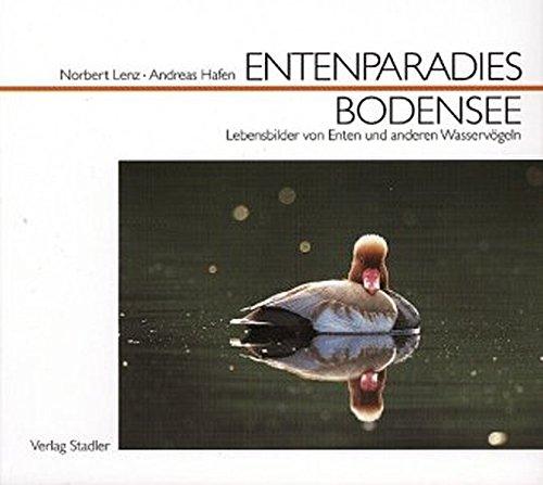 Entenparadies Bodensee: Lebensbilder von Enten und anderen Wasservögeln