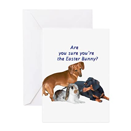 amazon com cafepress are you the easter bunny dogs greeting