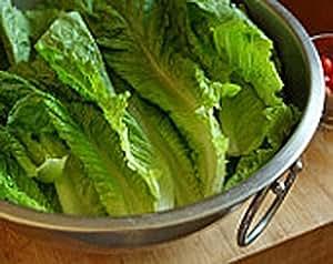 Lettuce , Paris Island Romaine lettuce seeds, Heirloom, Organic, Non Gmo, 50 Seeds,