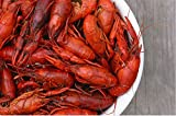 Fresh Louisiana Crawfish - 100lbs Package - Delivery Via SW Cargo - Other shipping options available offers