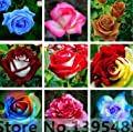 Mr.seeds The shrub roses seeds 100 pieces of rare flowers, roses, shrubs, seeds, Yellow, red, pink, purple, horticulture, bonsai exotic