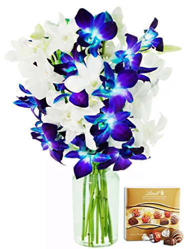 KaBloom Starry Night in the Tropics: Bouquet of 5 Blue Dendrobium Orchids & 5 White Dendrobium Orchids from Thailand with Vase and One Box of Lindt Chocolates