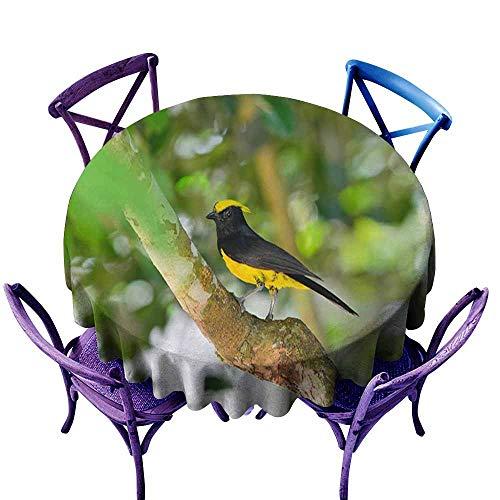 Acelik Round Outdoor Tablecloth,Beautiful Yellow Bird Sultan Tit (Melanochlora sultanea) Stand,Modern Minimalist,70 INCH