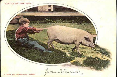 Little On The Hog Pigs Original Vintage Postcard -