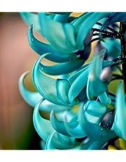 2016 Real Rare Endangered Jade Vine 'strongylodon Macrobotrys' Flower Seeds, Professional Pack, 10 Seeds / Fragrant Perennial