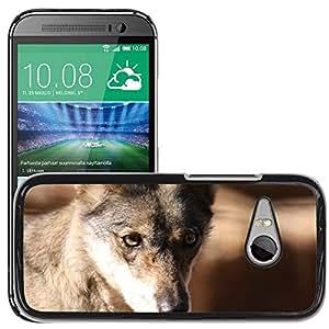 Super Stella Slim PC Hard Case Cover Skin Armor Shell Protection // M00106900 Fox Face Portrait Wolf Wild Head // HTC One Mini 2 / M8 MINI / (Not Fits M8)