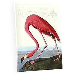 Niwo Art (TM - American Flamingo by John James Audubon. The Birds of America Reproductions. Giclee Print Acrylic Coating on Canvas for Home Decor (16 x 12 x 0.75 Inch)