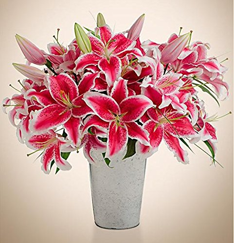Stargazer Barn - 12 Stems Pink Fragrant Stargazer Lilies with Rustic Décor Style Galvanized Vase - Direct From Farm - 1 Dozen Fresh Cut Flowers - Sustainably Grown in California - Fragrant Flowers by Stargazer Barn