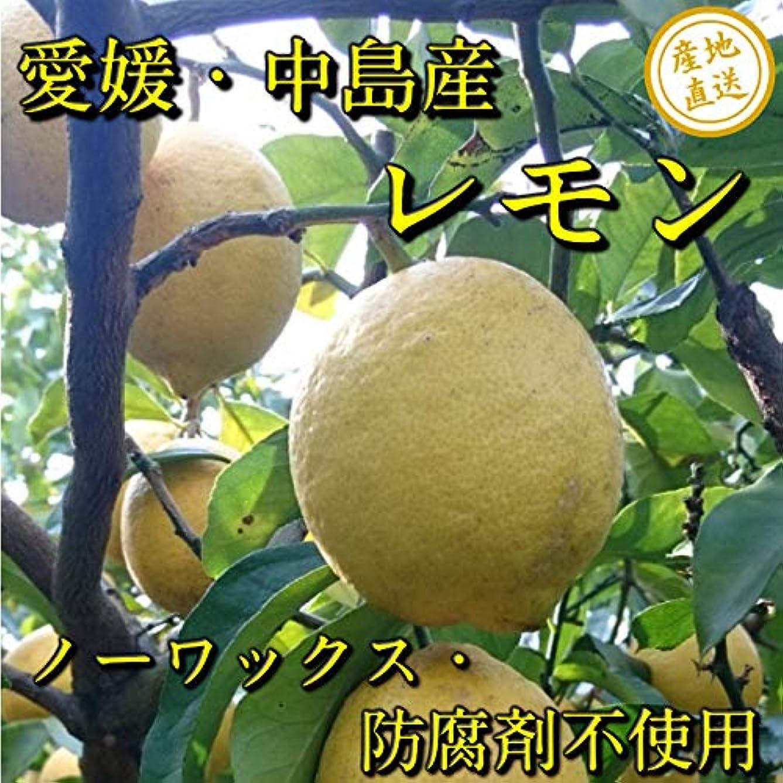 のみアサートイタリック2019年産予約受付中!長野県産 硬めのアンズで主に杏酒に最適な「特産 生アンズ 約1.8~2kg箱」