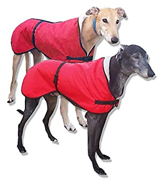 ITALIAN GH WHIPPET LURCHER GREYHOUND SOFT PADDED LEATHER COLLARS MADE IN THE UK