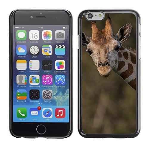 "Premio Sottile Slim Cassa Custodia Case Cover Shell // V00003351 girafe peut calendrier // Apple iPhone 6 6S 6G PLUS 5.5"""