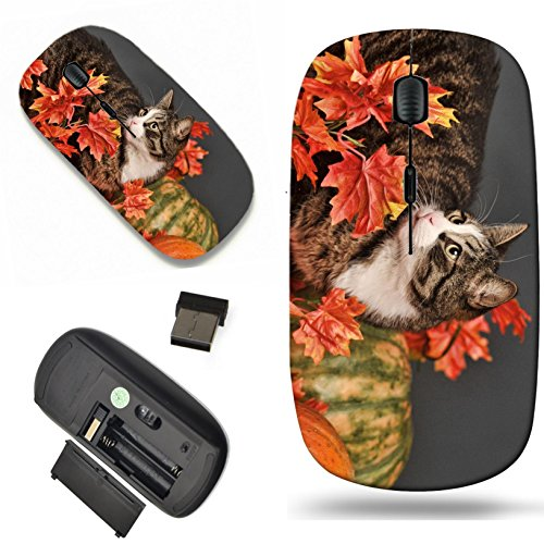 Luxlady Wireless Mouse Travel 2.4G Wireless Mice with USB Receiver, 1000 DPI for notebook, pc, laptop, macdesign IMAGE ID: 24174578 A pretty little calico kitten sits between pumpkins and autumn leave (Pumpkin Pretty)