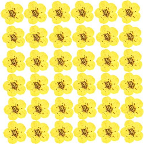 Dry flower Nail Art Sticker 3D Applique 100 Pcs Natural Real Dry Flower for Resin Jewelry Pendant Bracelet,DIY Crafts,Scrapbook,Nail Design Art Decorations Decals Supplies (Light-yellow)