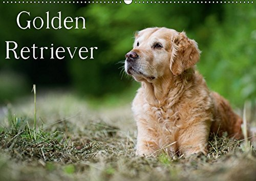 Golden Retriever (Wandkalender 2018 DIN A2 quer): 13 schöne Golden Retriever-Portraits für das ganze Jahr (Monatskalender, 14 Seiten ) (CALVENDO Tiere) [Kalender] [Apr 01, 2017] Noack, Nicole