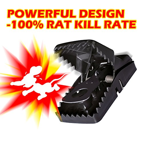 The 8 best rodent traps that work