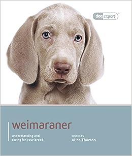 Weimaraner - Dog Expert