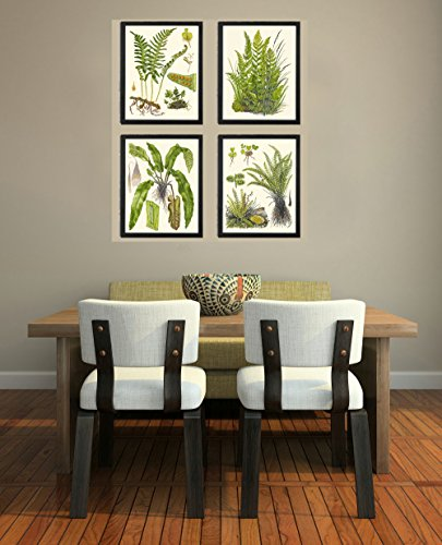 Botanical Set of 4 Prints Unframed Antique Beautiful Ferns Green Forest Nature Home Room Fern Decor Wall Art