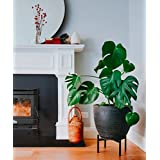 Stylish Plant Stand (LOW) | Indoor, Outdoor Flower Pot Stands | Planter  Stand For House, Garden, U0026 Patio | Holders For Pots U0026 Plants | Rust  Resistant Potted ...