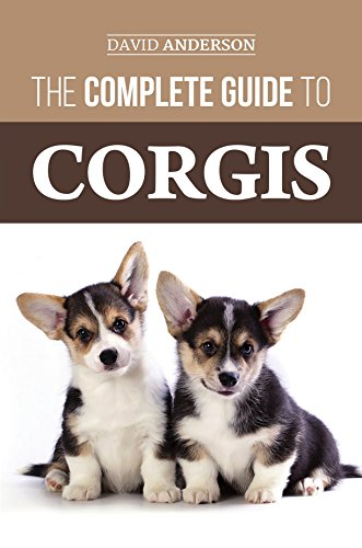 The Complete Guide to Corgis: Everything to know about both the Pembroke Welsh and Cardigan Welsh Corgi dog ()