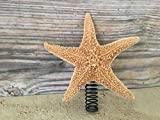 Small Sugar starfish tree topper is the perfect fit for mini to 4 ft trees. Unique and different, each starfish is completely different from the next. **These are suggestions to tree sizes. Please use your best judgment for what size of toppe...