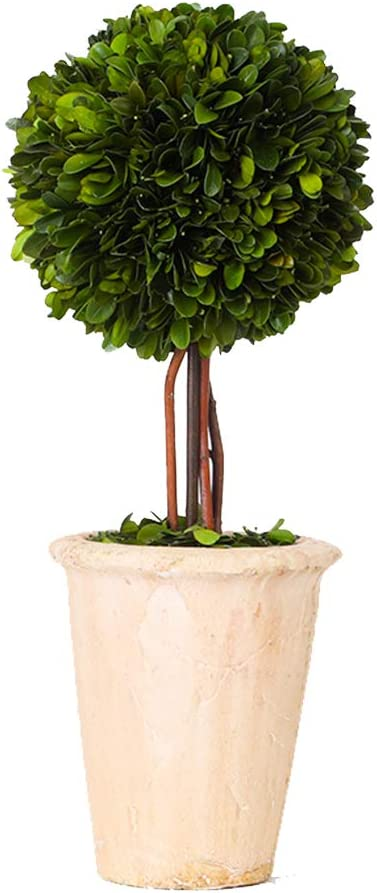 Real Preserved Boxwood Evergreen Globe Tree Topiary in Terracotta Planter Green Plant for Home Decor (Single Ball Topiary, 16 inch Tall)