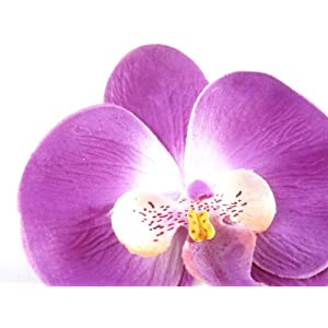 """(10) Purple Phalaenopsis Orchid Silk Flower Heads - 3.75"""" - Artificial Flowers Heads Fabric Floral Supplies Wholesale Lot for Wedding Flowers Accessories Make Bridal Hair Clips Headbands Dress 3"""