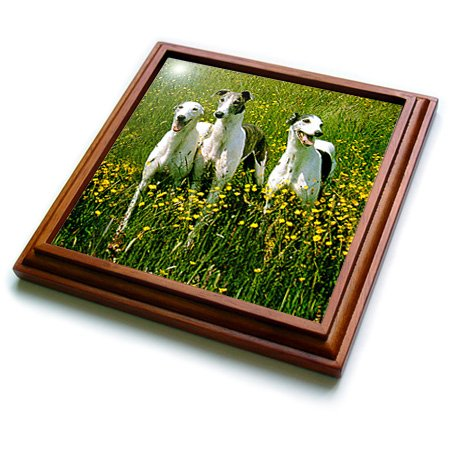 3dRose trv_483_1 Greyhound Trivet with Ceramic Tile, 8 by 8