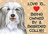 Love is… being owned by a Bearded Collie 5