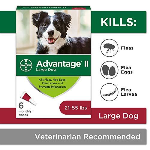 Flea and Lice Treatment for Dogs, 21-55 lb, 6 doses, Advantage II